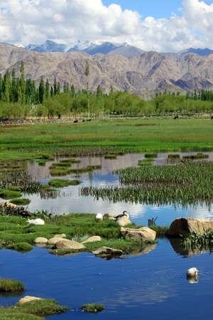 mountainous: Summer landscape with lake on mountain background. Ladakh. India