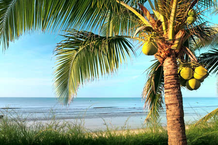 Beaautiful beach with coconut palm and sea photo