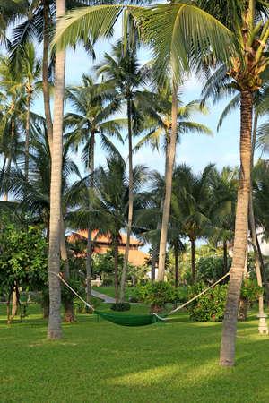 A hammock hanging under coconut tree in manicured park garden in tropics. Vietnam photo