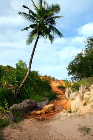 Landscape with palm tree and red river between rocks and jungle  Ham Tien canyon  Mui ne, Vietnam photo