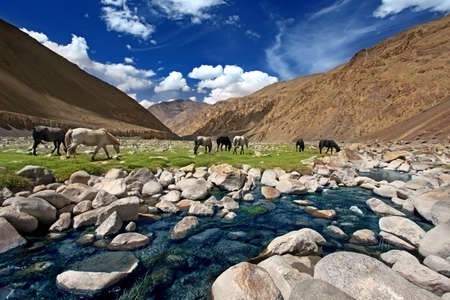 are grazed: Landscape with horses near river in mountains. Indian Himalaya. Stock Photo
