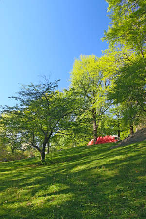 flowerbeds: Trees and blossoming flowerbeds in spring park