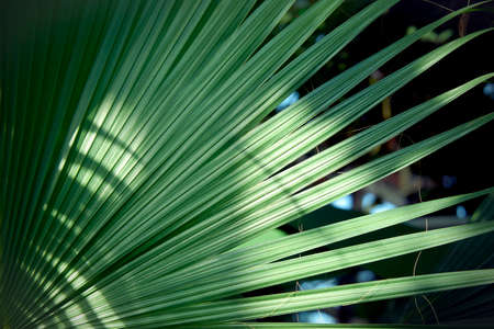 ocean plants: Palm tree branch. Tropical  background Stock Photo