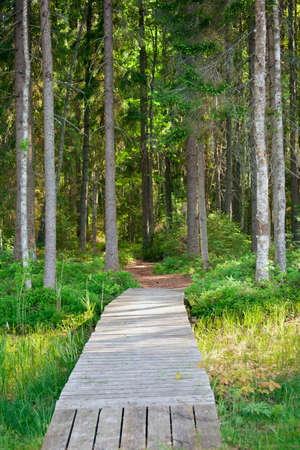 walking path: Walking path to the lake through a coniferous forest Stock Photo