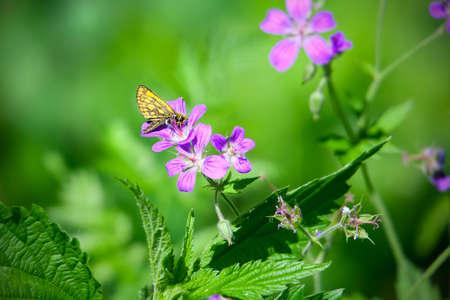 Mariposa en flor en el jardín de verano