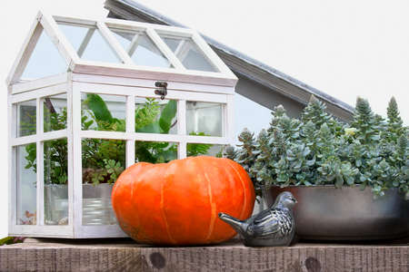 Autumn rural still life with harvested pumpkin, hotbed with plants and ceramic birds Stock Photo