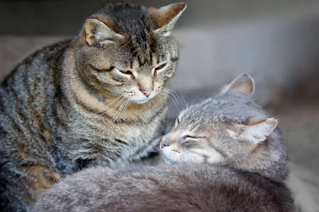 Two cats lying nearby. Spring tenderness