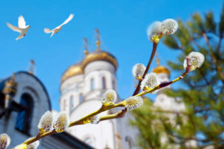 Palm Sunday. Willow branch  with catkins on the background of Orthodox church and the flying pigeons Stock Photo