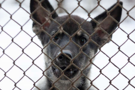 Dog at a rescue shelter waiting to be adopted in a cage kennel Banco de Imagens
