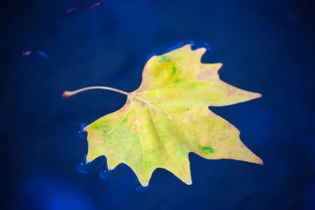 Autumn leaf on a blue water surface. Autumn mood Фото со стока