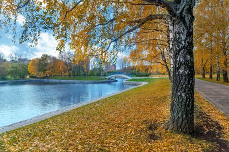Autumn landscape with the avenue of gold birches, pond and the bridge Stock Photo