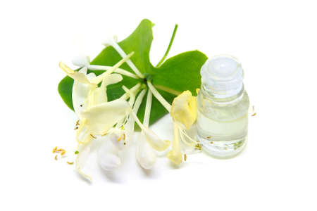 Lonicera caprifolium, honeysuckle flower essential oil (remedy, extract) bottle isolated on white background
