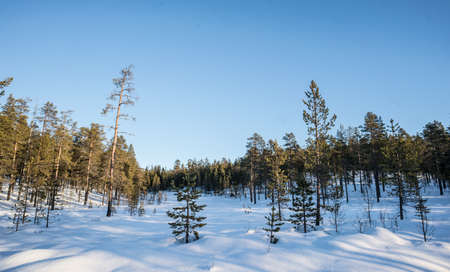 Winter Forest in south Sweden