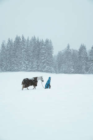 Horse outise during the winter 免版税图像