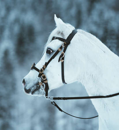 Horse outise during the winter Stock fotó