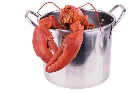 鍋にロブスターします。
