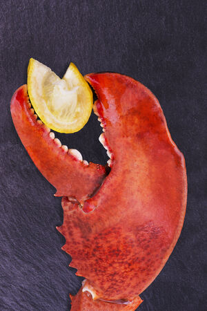 lobster isolated: Lobster claw Stock Photo