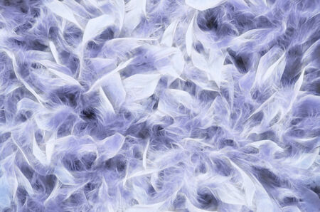feathering: Feathers background