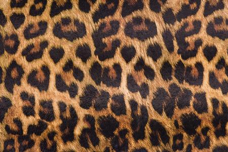 ヒョウの皮
