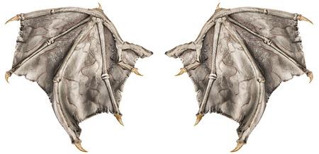 ドラゴンの翼 写真素材