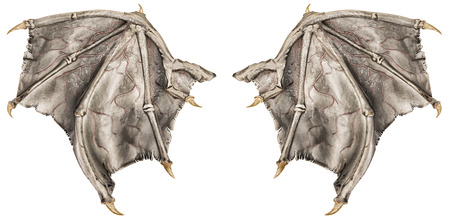 bat animal: Dragon wings