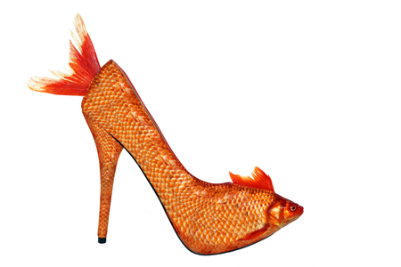 Gold fish high heel, isolated on white background. This image has been created . It does not exist in real life, its a photo manipulation. No animal was mistreated during the session. Stock Photo