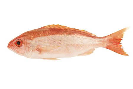 Red snapper raw fish isolated on white background. Cut out.