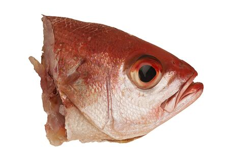 Red snapper head isolated on a white background. Close up and directly above.