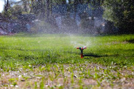 Garden sprinkler watering grass