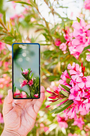 Using smartphone to make a photo in macro mode
