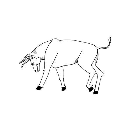corrida: hand draw a bull in front before the fight in the style of the sketch to design posters, cards, tattoos