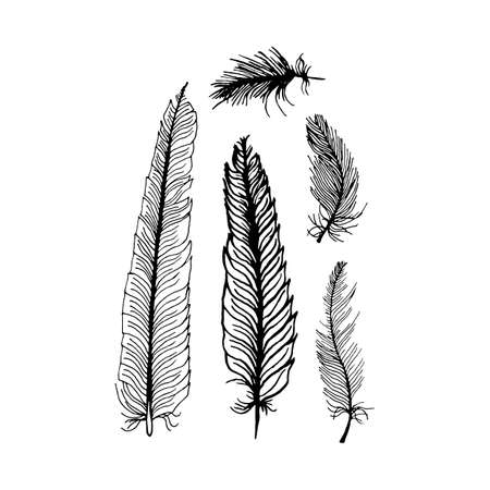 feathering: hand draw set of feathers on a white background, can be used as background printing on T-shirts and textile patterns