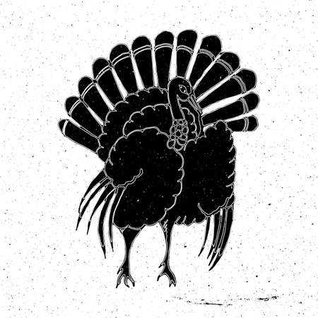 gobbler: Turkey hand drawn in grunge style, can be used as a print on a t-shirt, textile, background, sign for pet shop icon, signage for farm, holiday thanksgiving