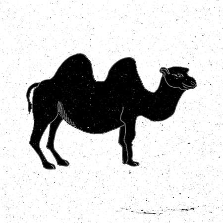 zoo as: Camel hand drawn in grunge style, can be used as t-shirt print, textile, background, sign for the zoo and the circus, icon, tattoo, poster Illustration