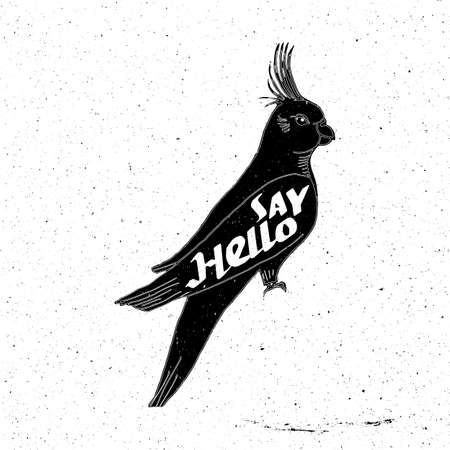 say hello: Parrot hand drawn with inscription say hello in grunge style, can be used as t-shirt print, textile, background