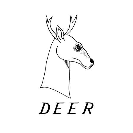fallow deer: hand draw a deer head with antlers to use for printing on T-shirts, tattoos, icons, banners