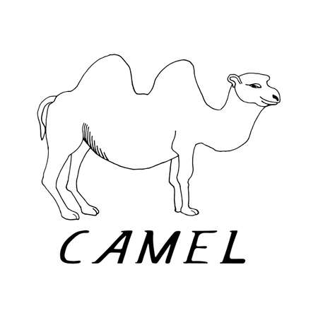 ungulate: hand draw a camel in the style of a sketch on a black white background, used for banners, flyers, coloring books, tattoo