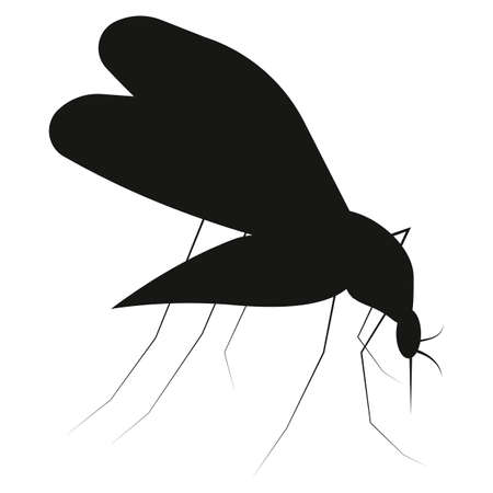 entomologist: Mosquito silhouette isolated on white background. Set icon