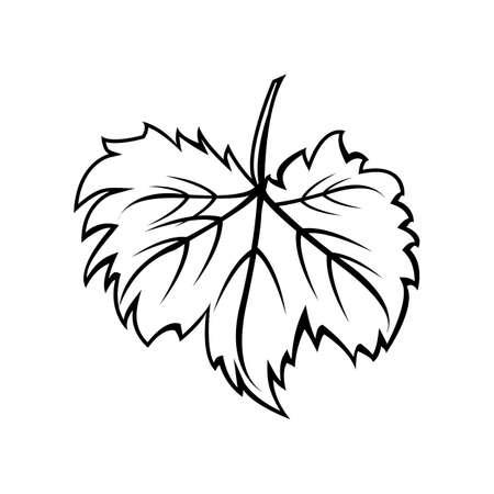 wine leaf. Illustration for label, card, menu decoration covers Illustration