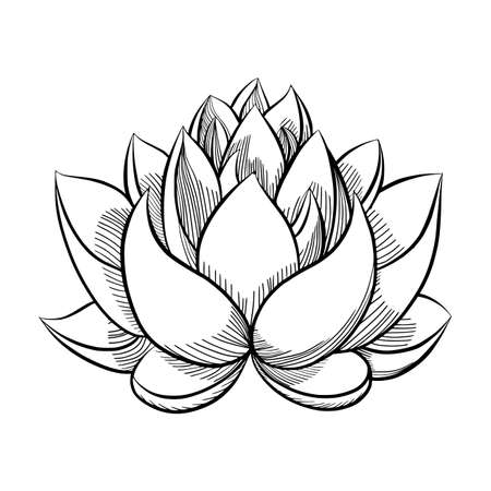 Hand drawn sketch of lotus flower.