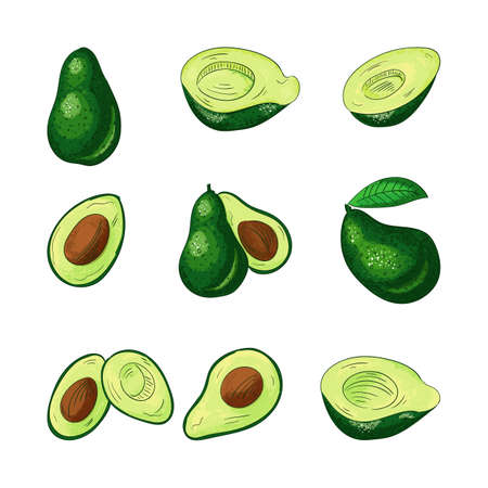 Avocado whole and cut color illustrations set