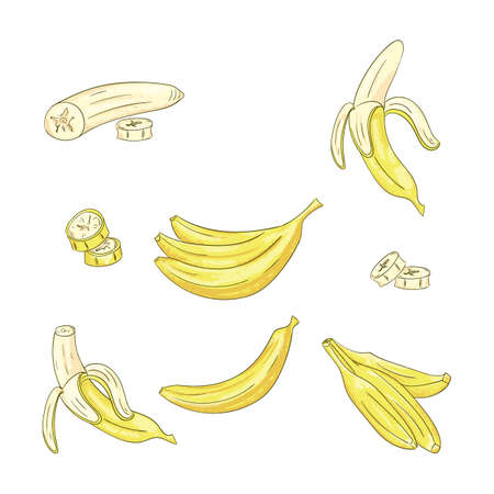 Banana single and bunch color illustrations set. Long, yellow tropical fruit. Peeled and sliced sweet dessert sketch. Tasty vegetarian snack. Exotic plant for coloring book Ilustração