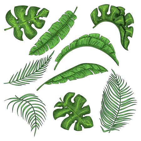 Zestaw tropikalnych liści palmowych, kolekcja liści bananowca w dżungli