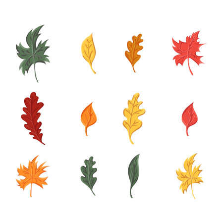 autumn leaves set, isolated on white background. simple cartoon flat style Stockfoto - 127905025