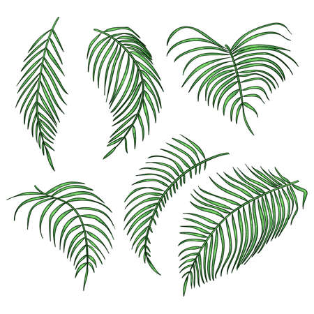 Vector palm leaves, jungle leaf set isolated on white background. Stock Illustratie