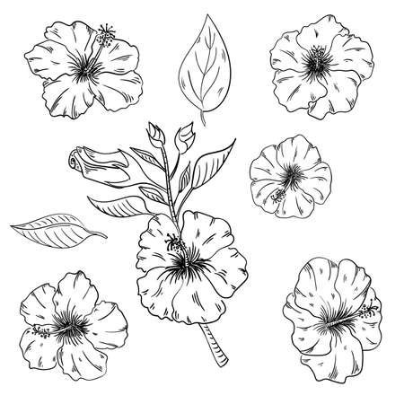 Hibiscus floral tropical flowers set. Wild spring leaf wildflower isolated. Black and white engraved ink art