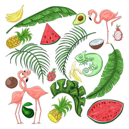Tropical collection for summer party: exotic leaves, flamingos and fruits and chameleon. Vector design isolated elements on the white background.