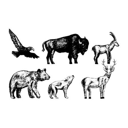 vintage collection or set of hand drawn vintage styled engraved wild animals for design
