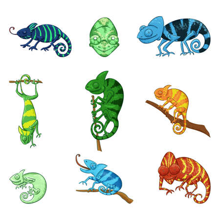 Chameleons in different poses color illustrations set. Exotic animal catching food black ink sketch. Funny lizard with long tongue, able to change colors hand drawn doodles collection Stock Illustratie