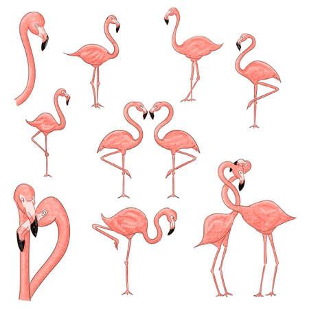 Cartoon flamingo set vector illustration isolated on a white background.